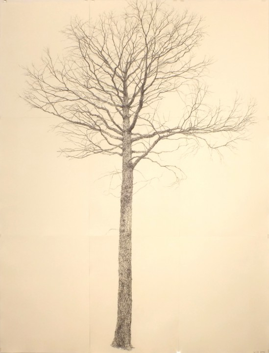 「落葉松」2013 紙、木炭 195×150cm