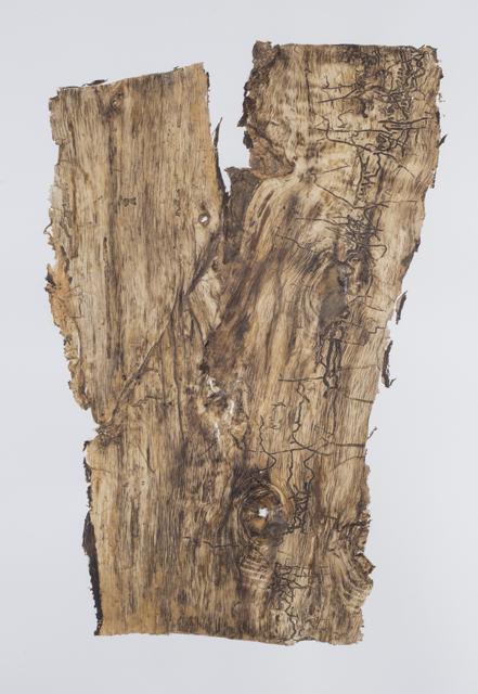 Skin of tree 20