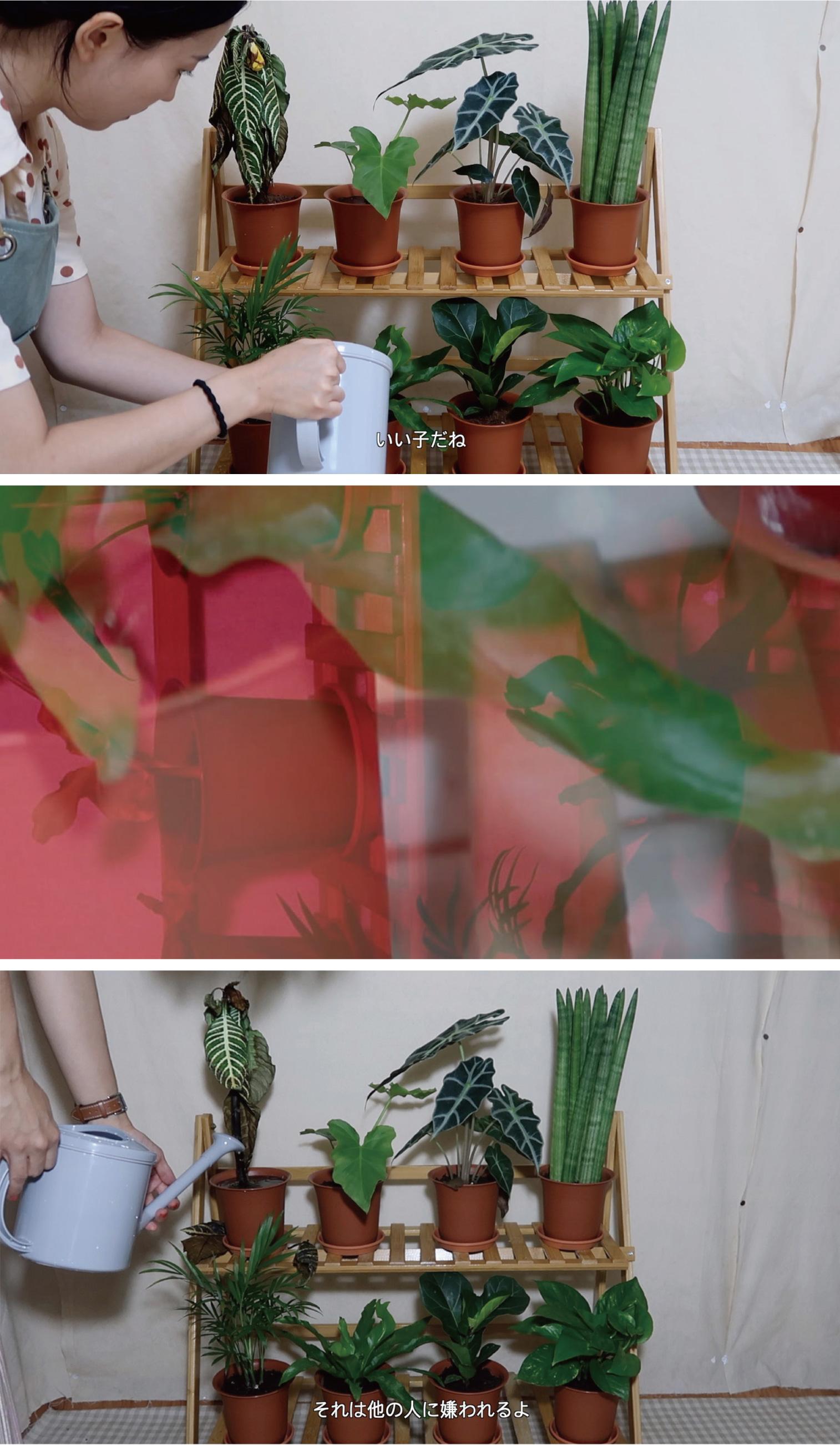 李 世珍「陰地から日向へ或いは、日向から陰地へ」モニター・映像 可変